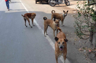 Stray Dogs Off The Roads