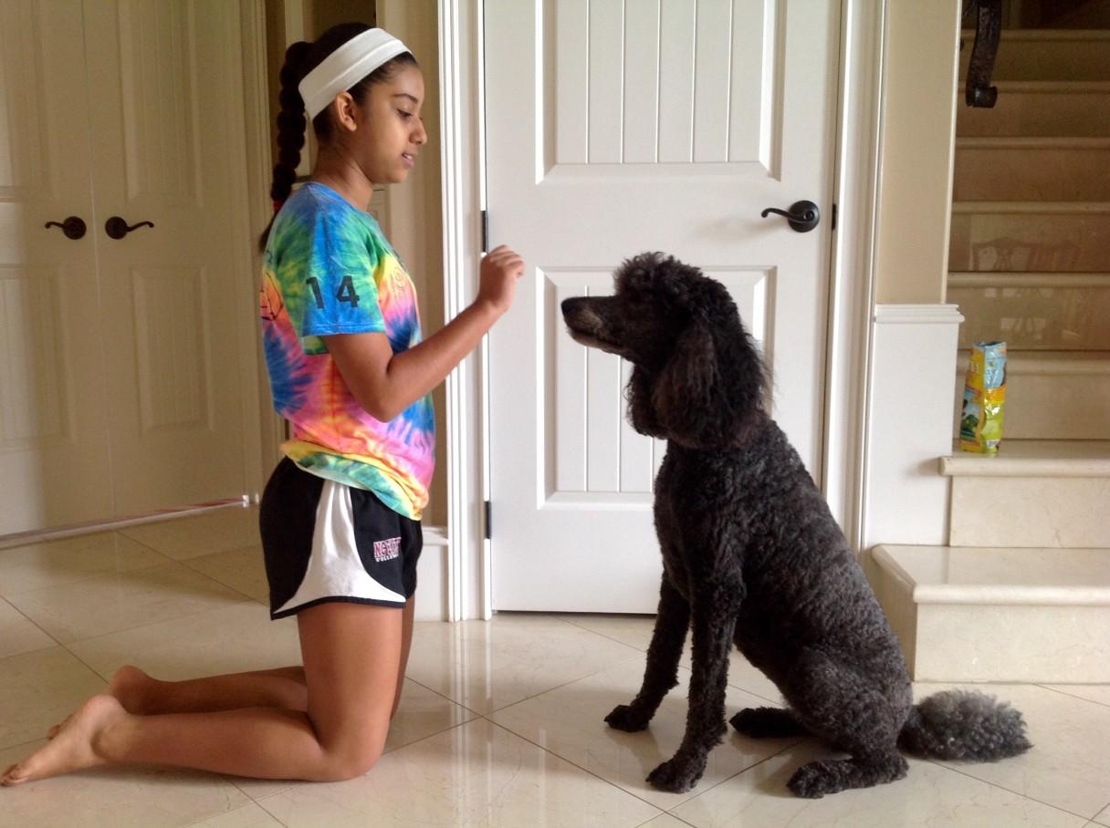 dog-tricks-1
