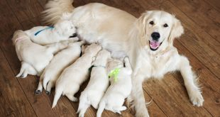 6 Best Ways To Improve Dog Milk Production