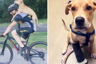 Cyclist Helps Injured Stray Dog
