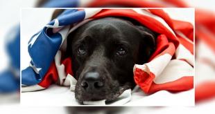 Safe dog During 4th July Fireworks