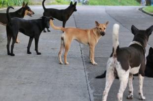 Stray dog in Chandigarh
