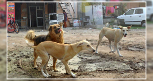 Stray dog menace in Chandigarh