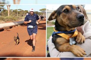Stray dog wins the marathon