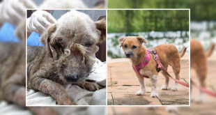 An Incredible Transformation Of A Stray Dog