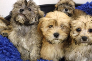 86 Dogs rescued From Illegal Breeder