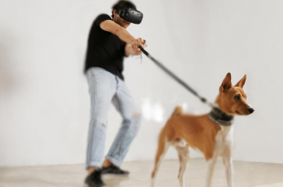 VR with Dog