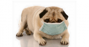 respiratory infections in dogs