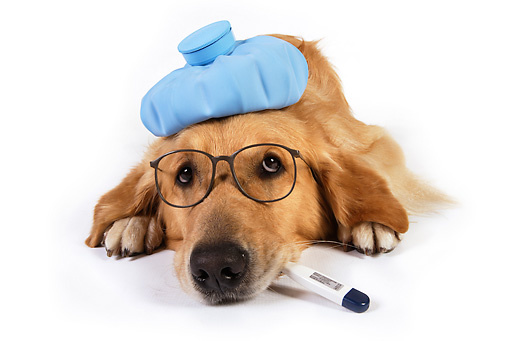 symptoms of respiratory infection in dogs