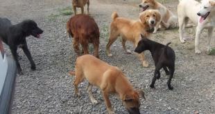 dog pound in Panchkula