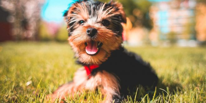 15 interesting dog facts