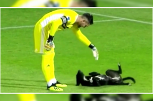 Dog interrupted soccer match