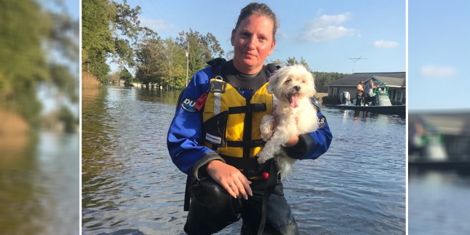 Rescue Team Saved A Dog