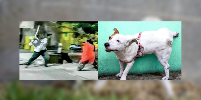 Man Beats Woman As Her Dogs Urinates Over His Wall In Chennai