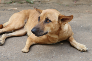 Dog Stabbed to death in Chennai