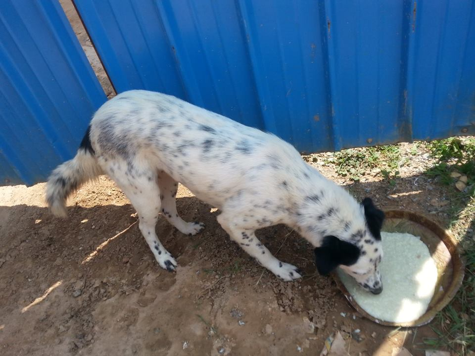 stray dog eating food