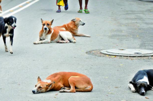 stray dogs relocate illegally in Hyderabad