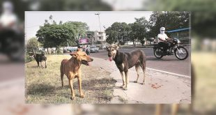 Mohali MC stray dogs issue