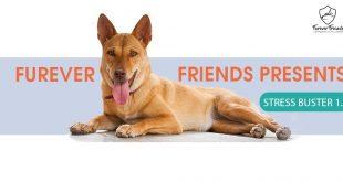 Stress Buster 1.0 event Chandigarh Furever Friends