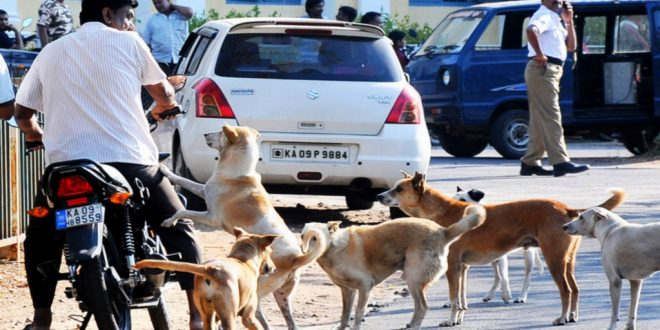Supreme Court Issues Notice To Karnataka MC For Violating Orders & Killing 350 Stray Dogs
