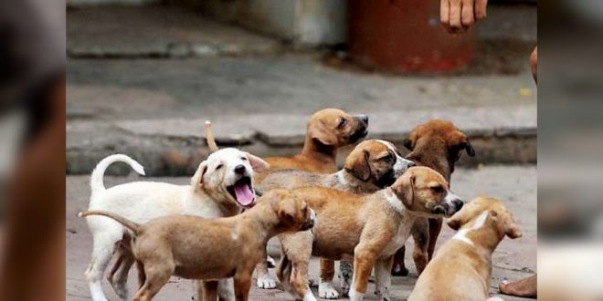 Woman Fined 3 6 Lakh For Feeding Stray Dogs In A Society In