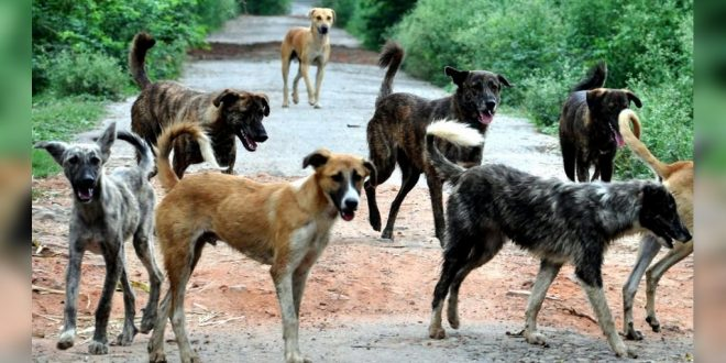 Rise In Dog Bite Cases