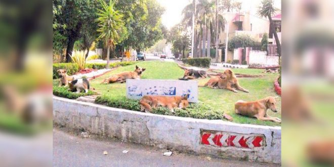 Chandigarh Stray dogs