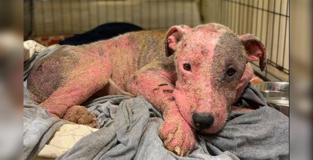Buried dog found sunburned | US dog