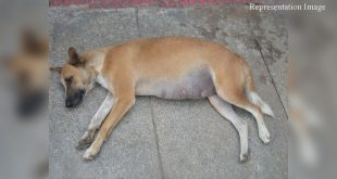 Stray dog stabbed in Mumbai
