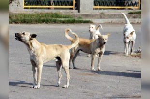 Chandigarh dog news