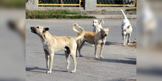 Chandigarh dog news