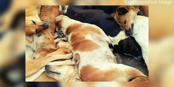 Stray dogs tied and killed in Maharashtra