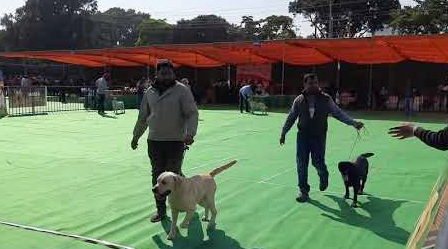 dog show in Chandigarh