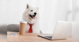 Pet business marketing solutions